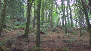 Secluded wooded area — Stock Video