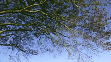 Tree branches contrasting against the blue sky — Stock Video