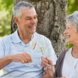Happy senior couple toasting champagne flutes at park — Stock Photo