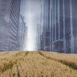 Stock Photo: Cityscape projection over yellow fields