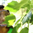 Environmental activist looking at leaves through magnifying glass — Stock Video