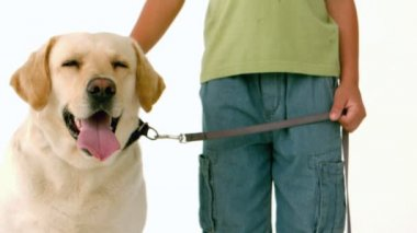 Little boy with his yellow labrador — Stock Video
