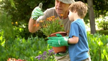 Man showing potted plant to grandson — Stock Video