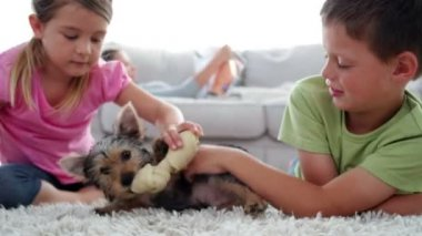 Siblings playing with puppy and bone with their mother reading on the sofa — Stock Video