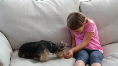 Cute little girl playing with yorkshire terrier puppy — Stock Video