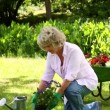 Retired couple gardening together — Stock Video