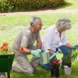 Mature couple watering young plants — Stock Photo