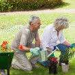 Mature couple watering young plants — Stock Photo #42917203