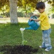 Young boy watering a young plant in park — Stock Photo #42927365