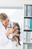 Veterinarian examining puppy — Foto Stock