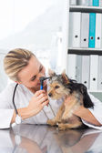 Veterinarian examining ear of dog — Stock Photo