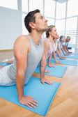 Grupo fazendo pose de cobra em linha na aula de yoga — Fotografia Stock