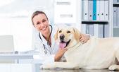 Tierarzt untersuchen hund — Stockfoto