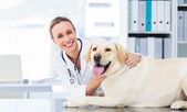 Veterinarian examining dog — Photo