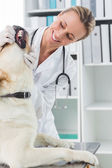 Vet examining teeth of dog — Foto Stock