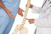 Połowie sekcji dwóch lekarzy dyskusji oprócz modelu szkieletu — Zdjęcie stockowe
