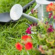 Spade and watering can by flowers — Stock Photo