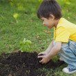 Young boy planting a young plant in park — Stock Photo #42936549