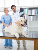 Veterinarians discussing Xray of dog — Stock Photo