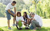 Environmentalists planting in park — Stock Photo
