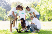 Volunteers planting in park — Stock Photo