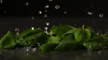 Water dropping onto basil leaves — Stock Video