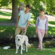 Couple with their labrador in the park — Stock Photo #48234953