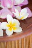 Delicate flowers in bowl — Stock Photo