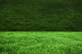 Two shades of green grass — Stock Photo