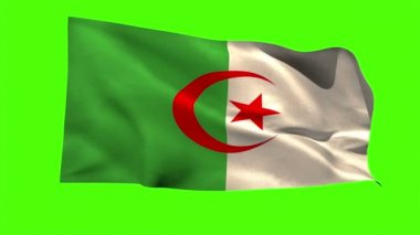 Algeria national flag blowing — Stock Video