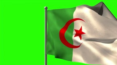 Algeria national flag waving — Stock Video