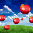 Red apples against green field — Stock Photo #51561945