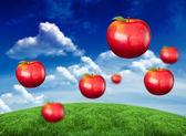 Red apples against green field — Stok fotoğraf