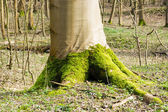 Bright green moss at the foot of a tree in spring forest — Stock Photo