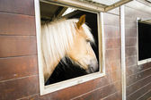 Pony horse in its stalls — Stock Photo