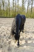 Grappige zwarte paard — Stockfoto