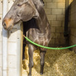 Foto Stock: Horse in its stall