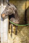 Horse in its stall — Foto Stock