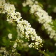 White and yellow flowers against green bush background — Stock Photo #22717209
