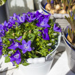 Campanula blue flower bouquet in the bucket — Stock Photo