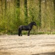 Funny black horse — Stock Photo