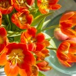 Stock Photo: Red tulips and apples in sunlight