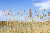 Sjön, national park zuid kennemerland, nederländerna — Stockfoto