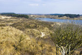 Jezera, národní park zuid kennemerland, nizozemsko — Stock fotografie