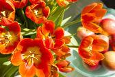 Tulips in sunlight — Stock Photo