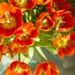 Tulips in sunlight — Stock Photo