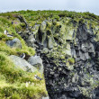 Puffins on the cliff, Iceland summer — Stock Photo