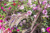 Piękny kolorowy kwiat ogród z różnych kwiatów — Zdjęcie stockowe