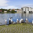seagulls near a pond in the center of reykjavik — Stock Photo #33305631