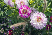 Beautiful colorful flower garden with various flowers — Stock Photo